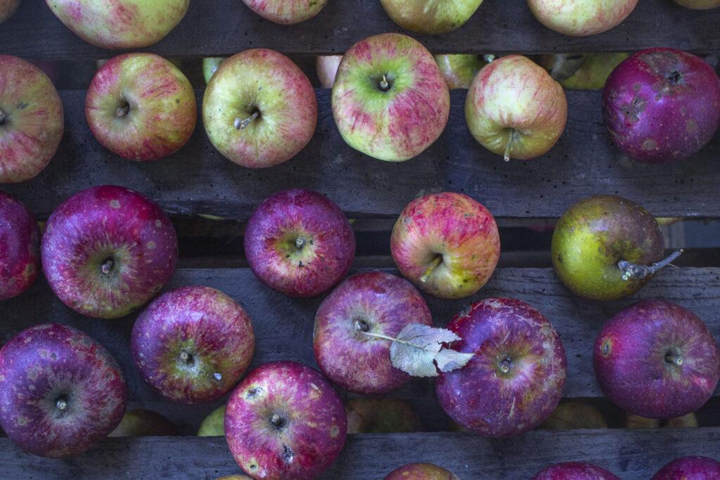 Opbevaring af æbler sådan gør du