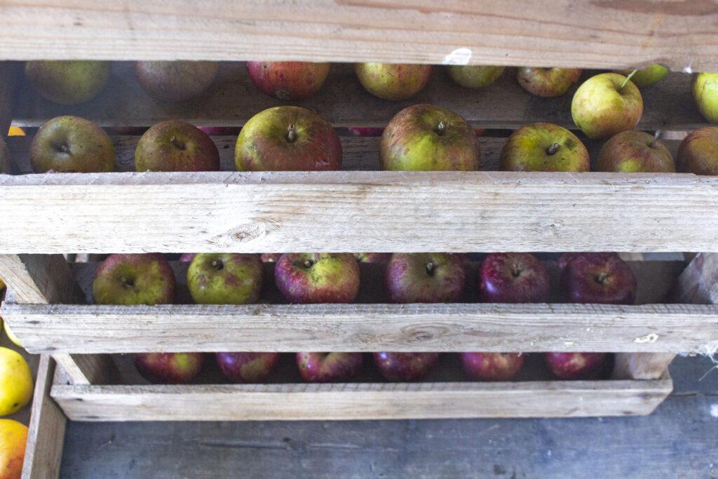 Tjek frugten løbende gennem vinteren