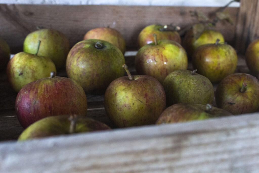 Vælg den rigtige opbevaring til æbler