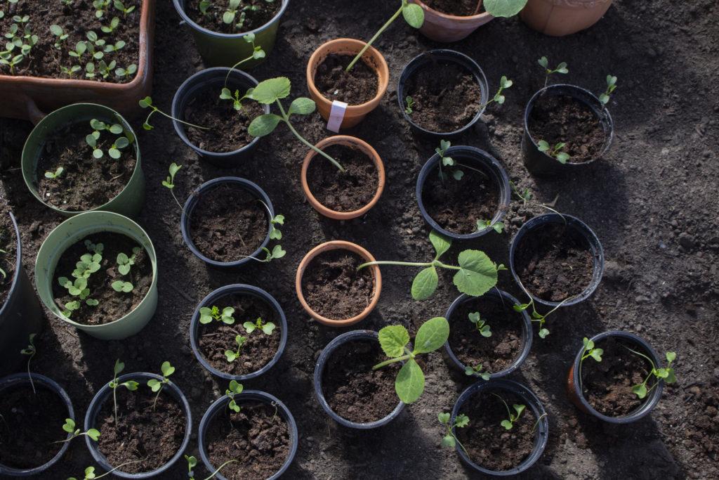 forspiring af sommerblomster og grøntsager