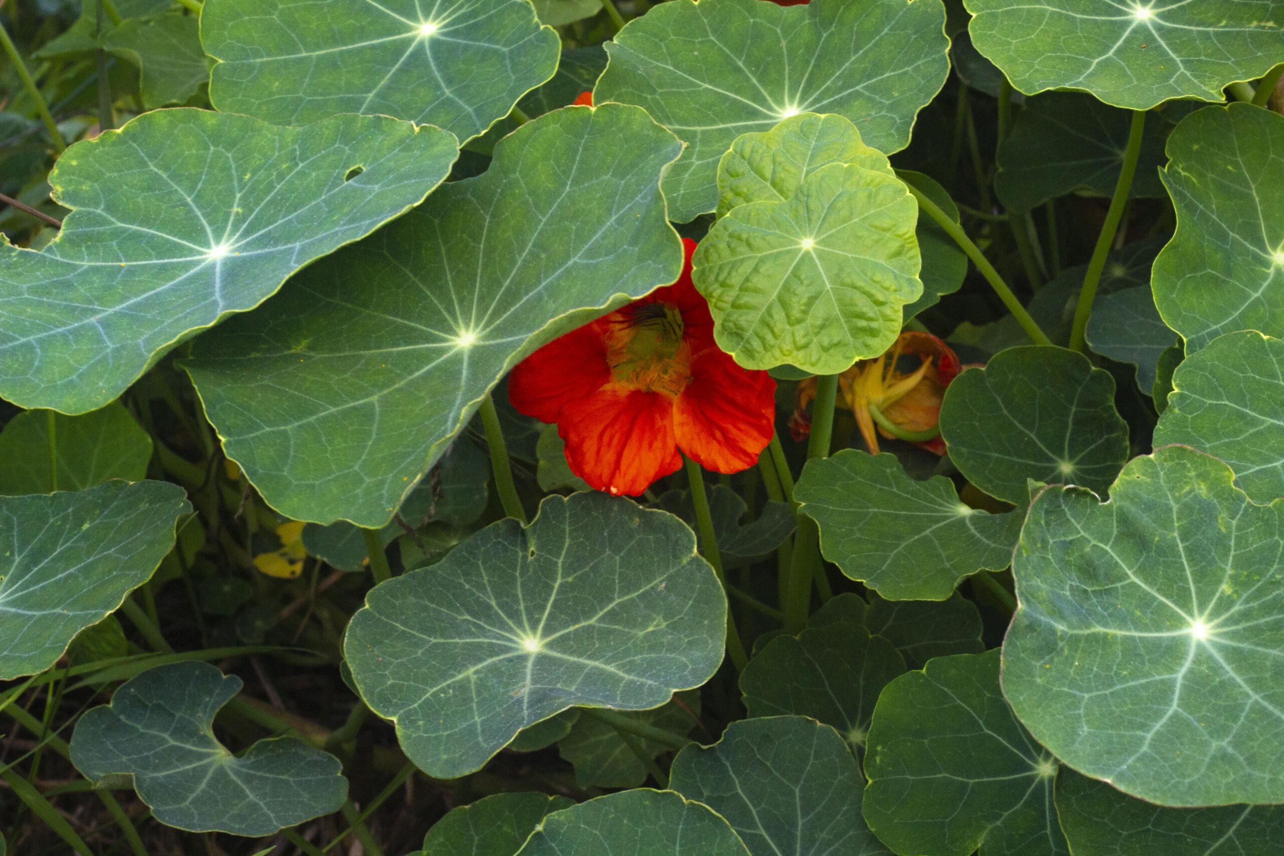 Farvestrålende blomster