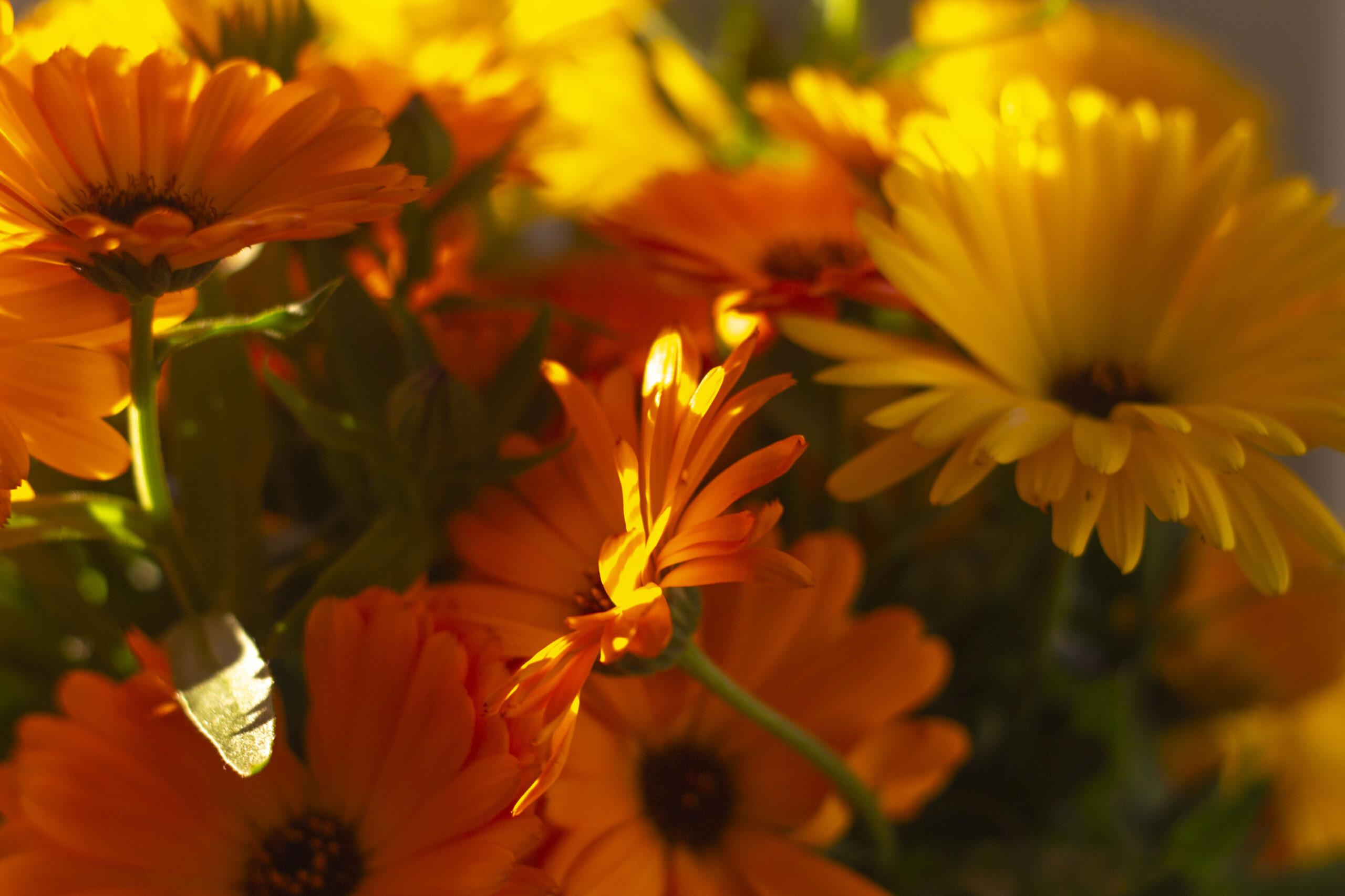Mange farverige blomster