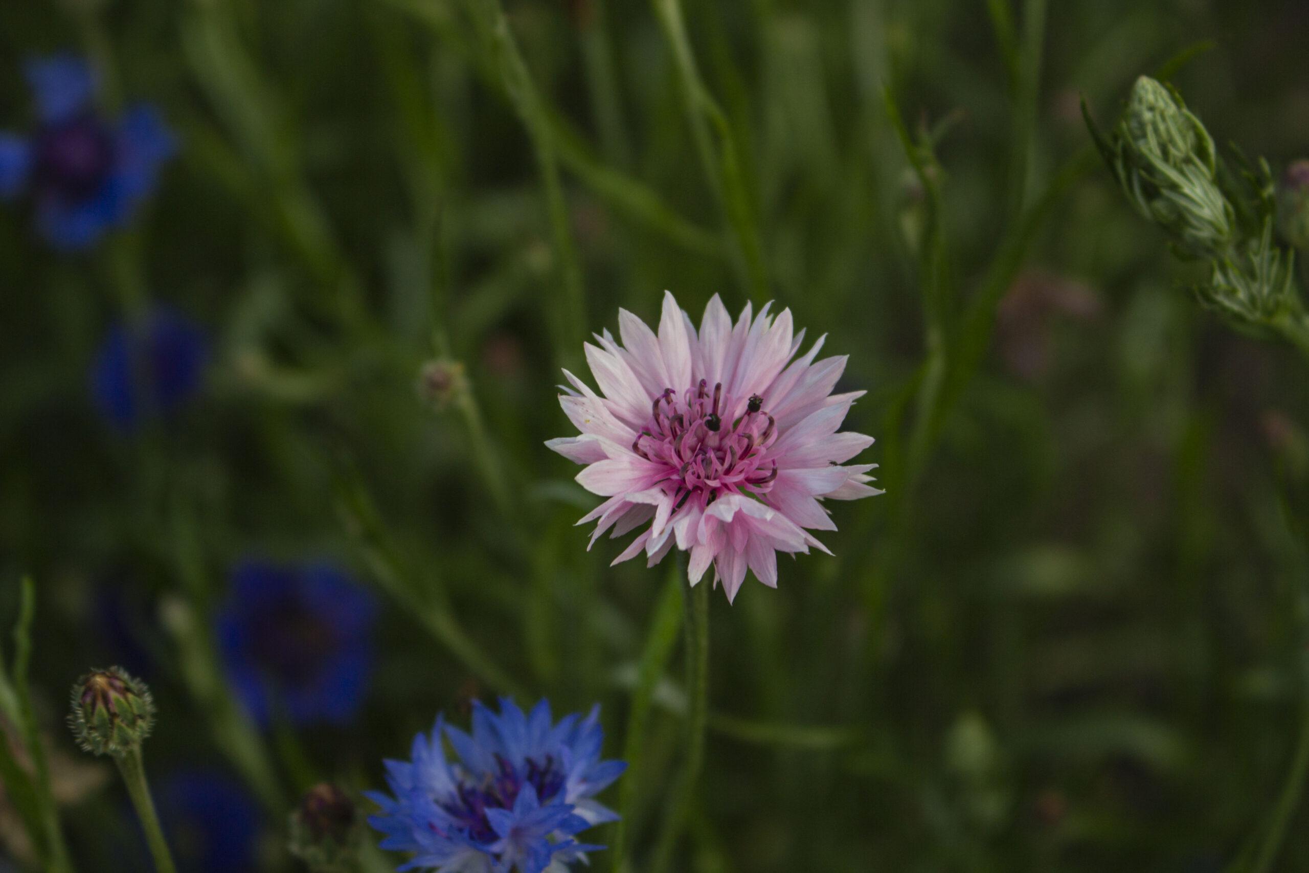 Blomstringstid & buketter