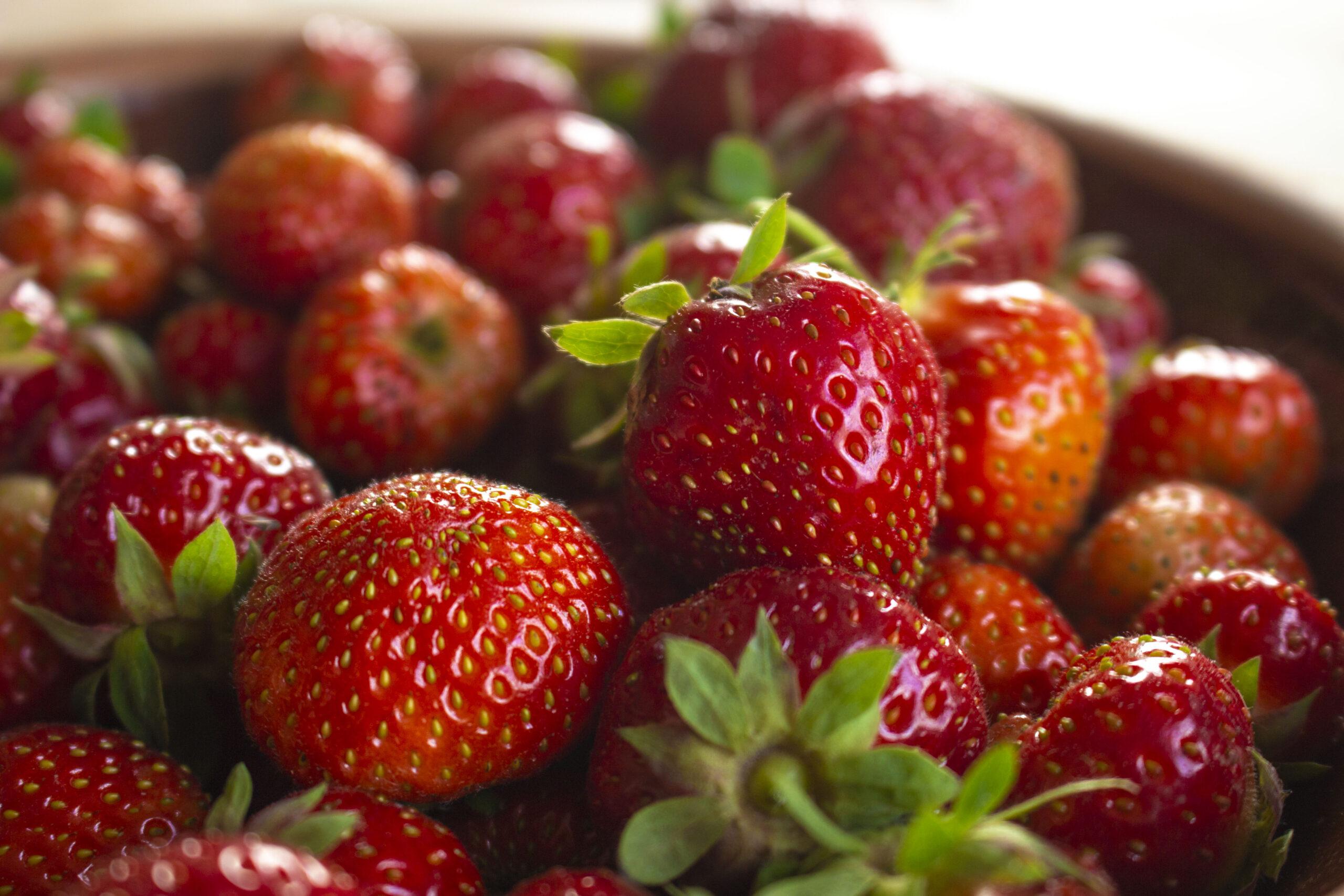 Brug-frugthaven