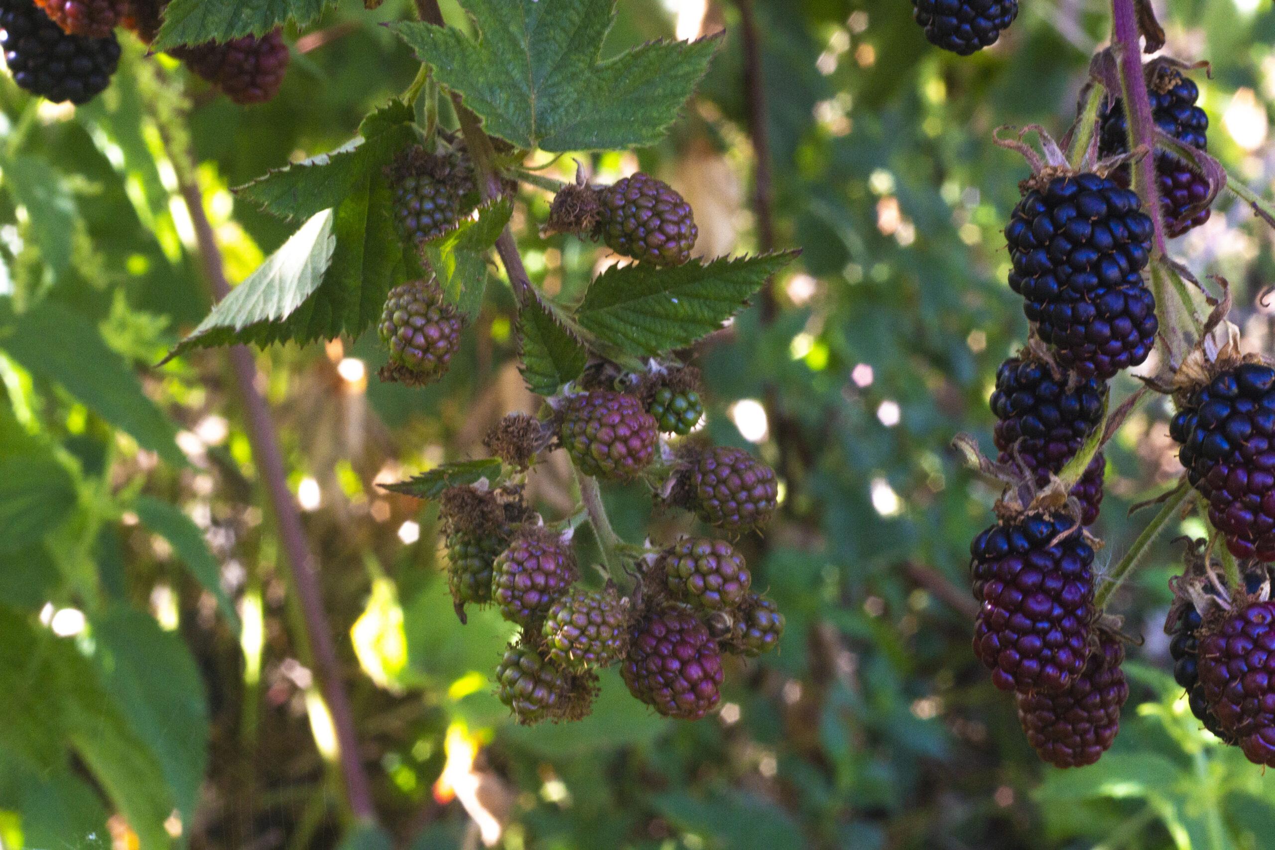 Brug frugthaven