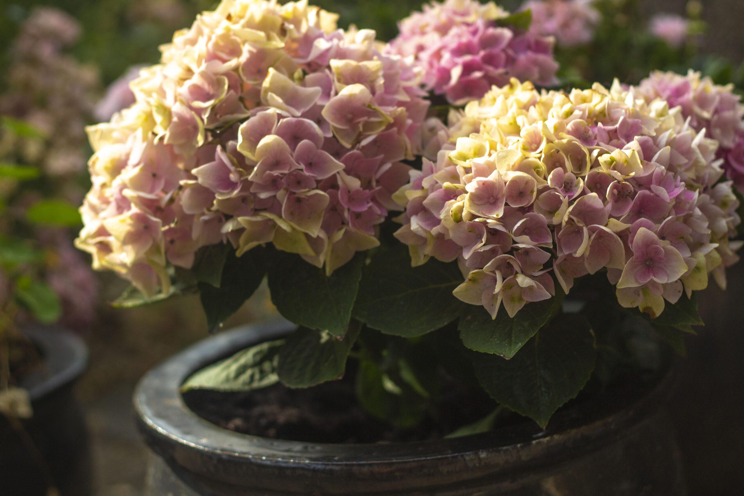 10 skønne blomster til altanen