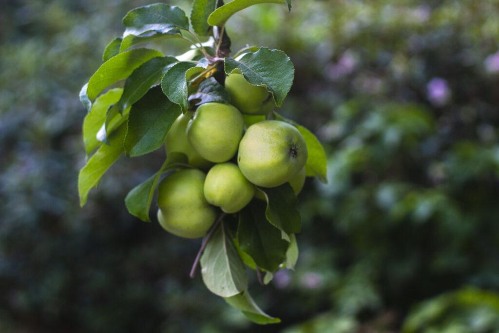 10-Friskplukkede-frugter-&-bær