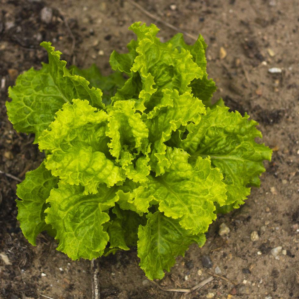 4 Salat