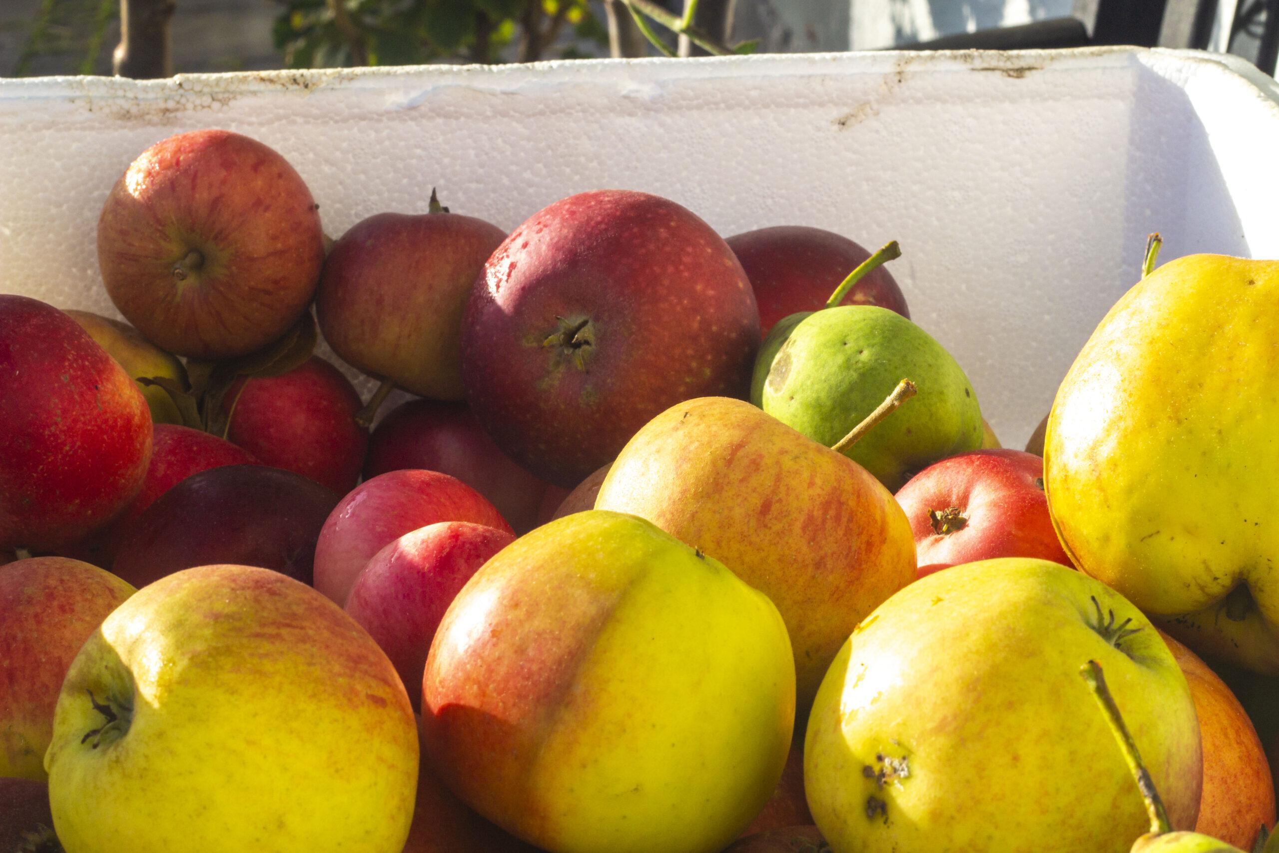 Gem æbler til vinteren