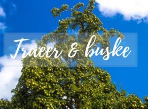 Træer og buske