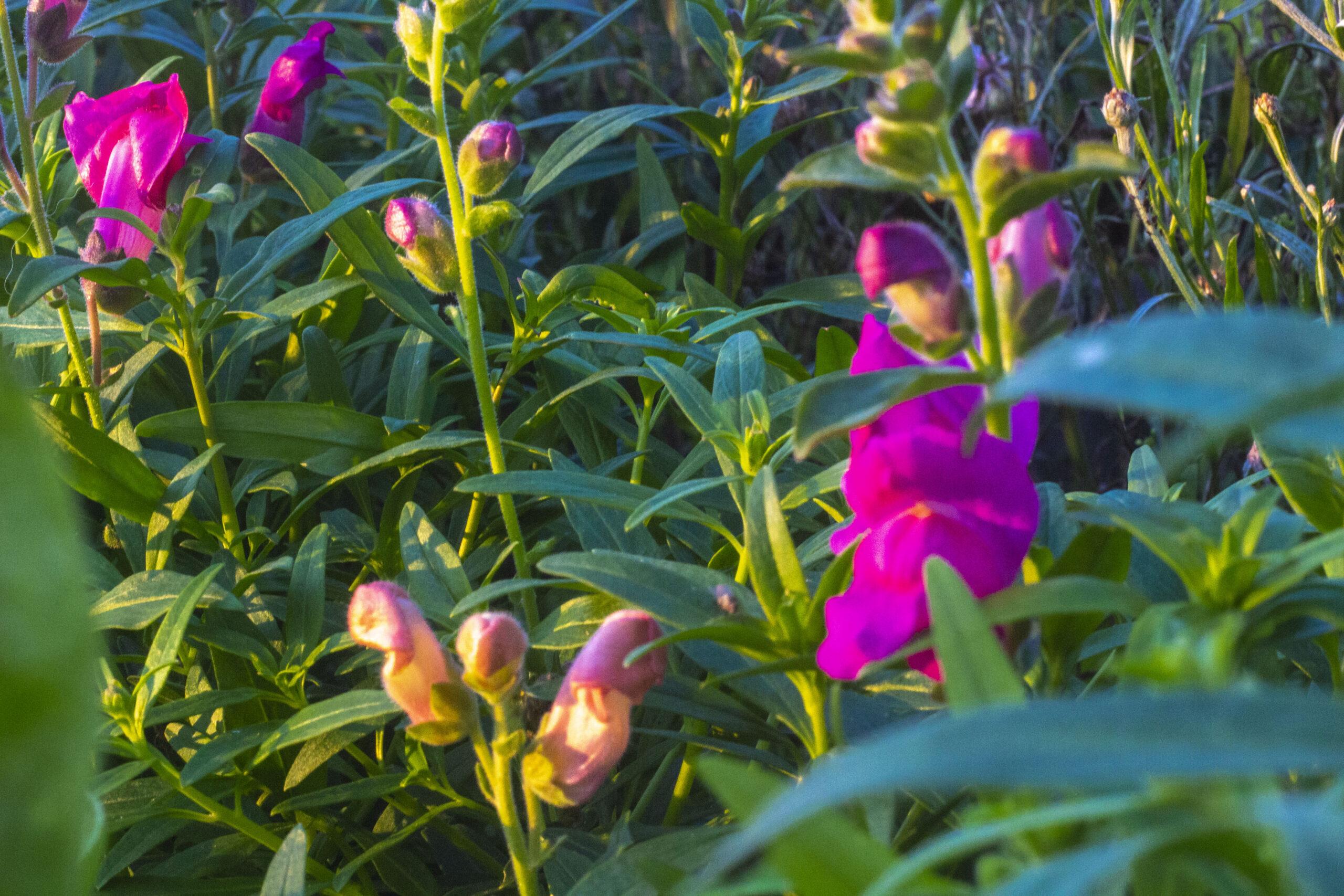De fineste blomster