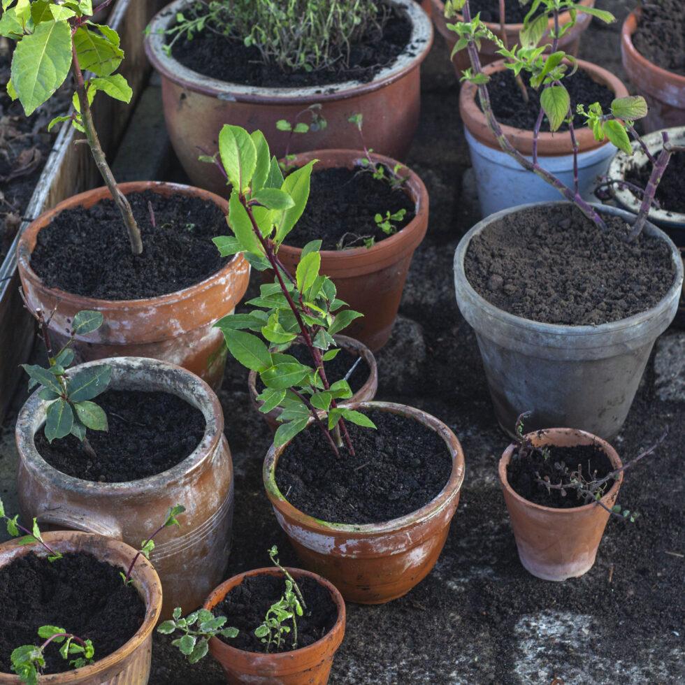 Foråret kommer Tid til at afhærde planter