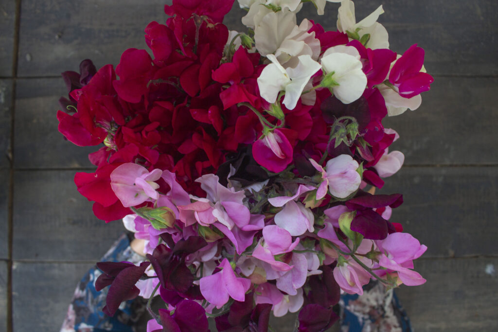 Vil du have mange blomster? Så skal du plukke buketter