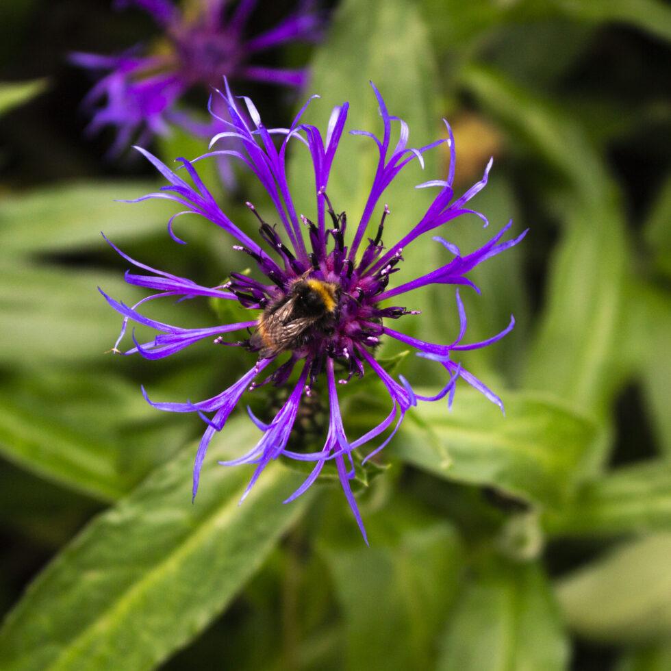 Biodiversitet i haven