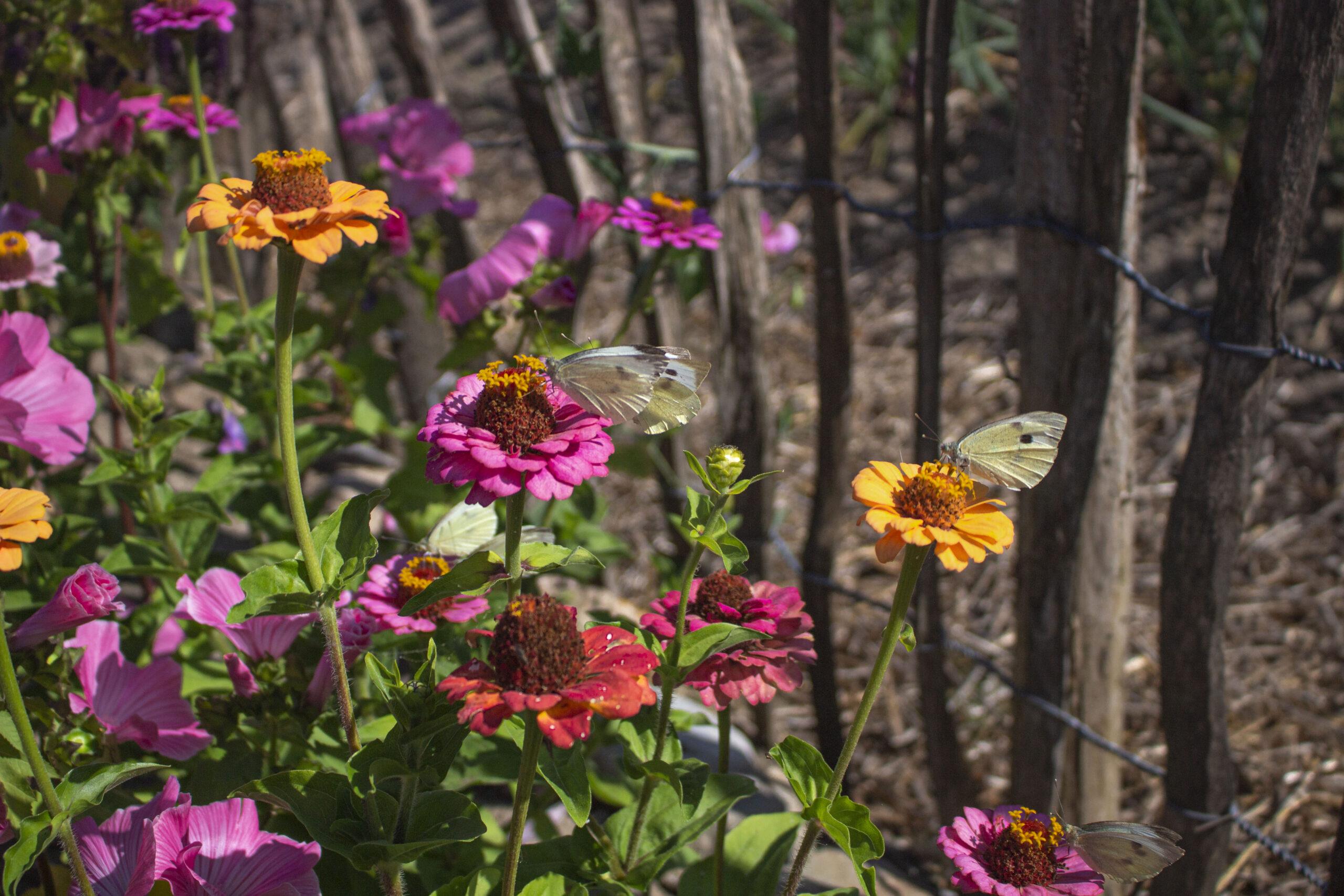 Få bedre biodiversitet i haven