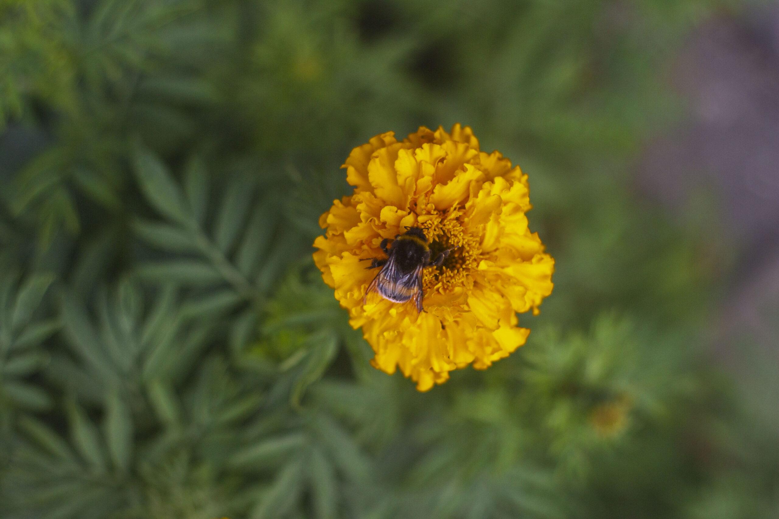 Biodiversitet – Hvad kan jeg gøre