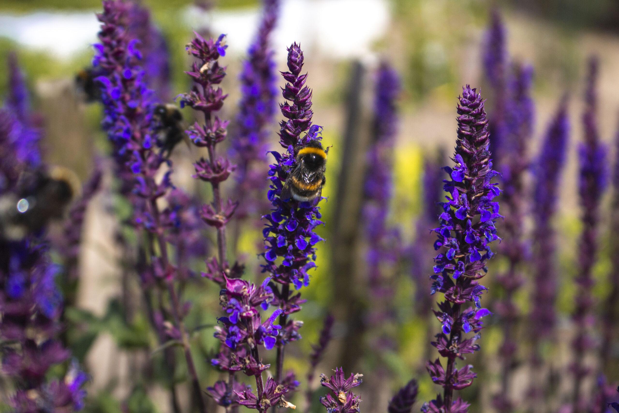 Hvad betyder biodiversitet
