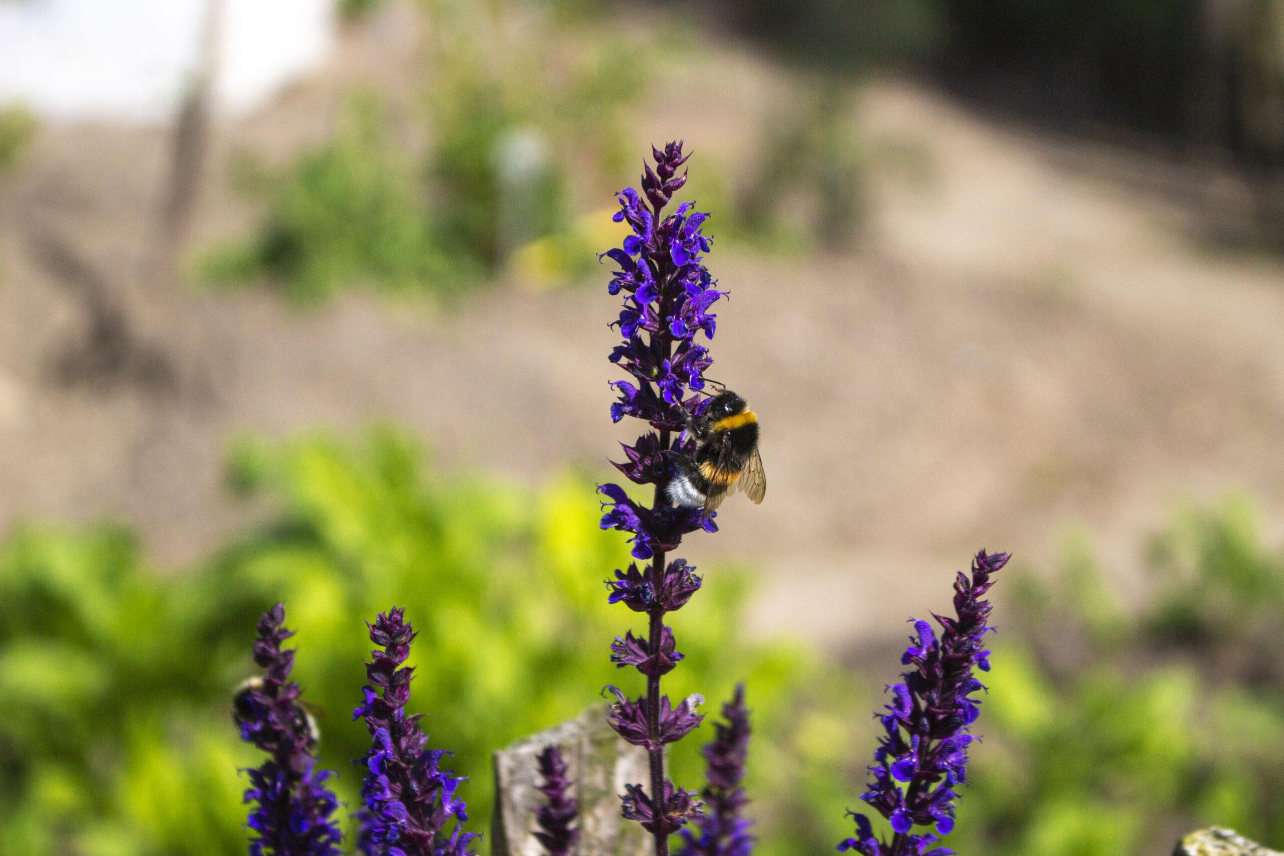 En have med biodiversitet