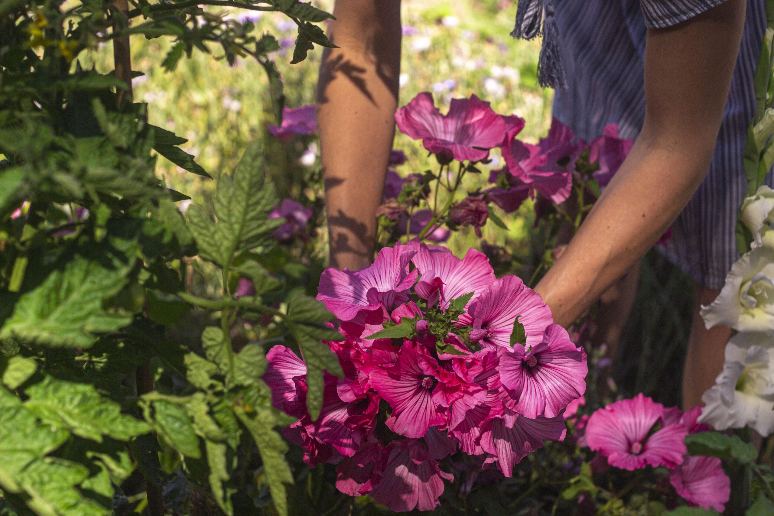 Rosa pink eller hvid mamelukærme