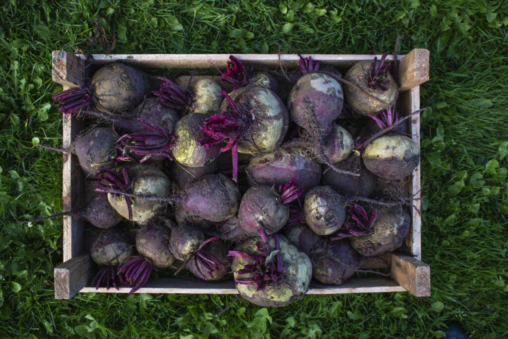 10-grøntsager-til-dit-efterår