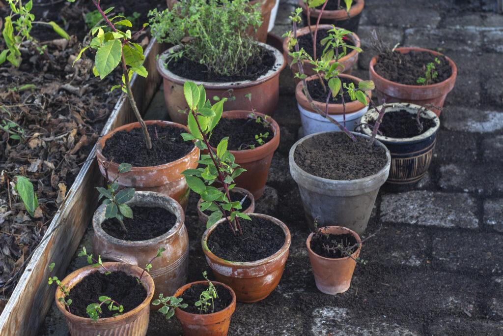 tilbage-med-planterne