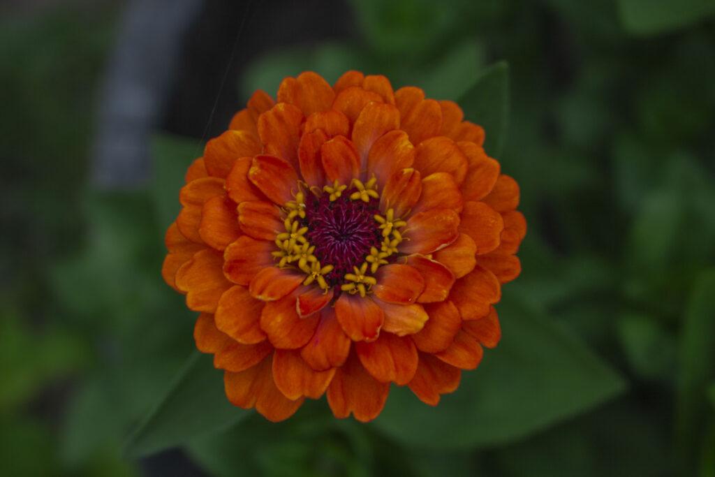 Glæd-dig-over-frøkenhat-i-haven
