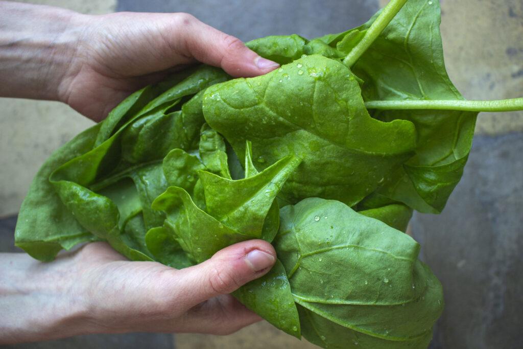 gode opskrifter med spinat