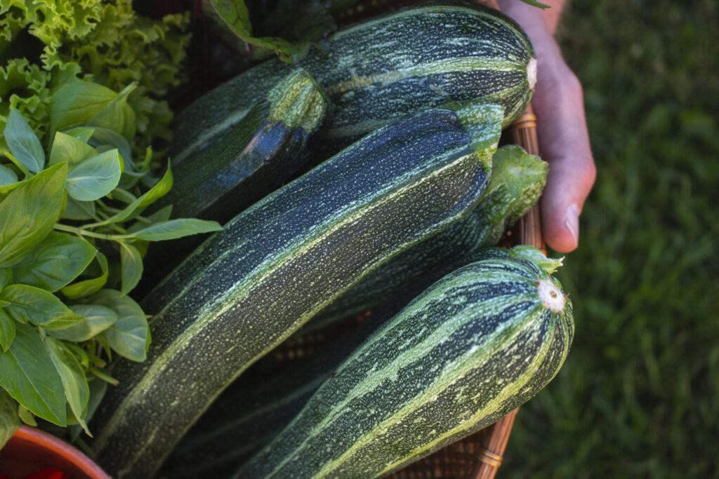 Hold en stor havefest til sommer