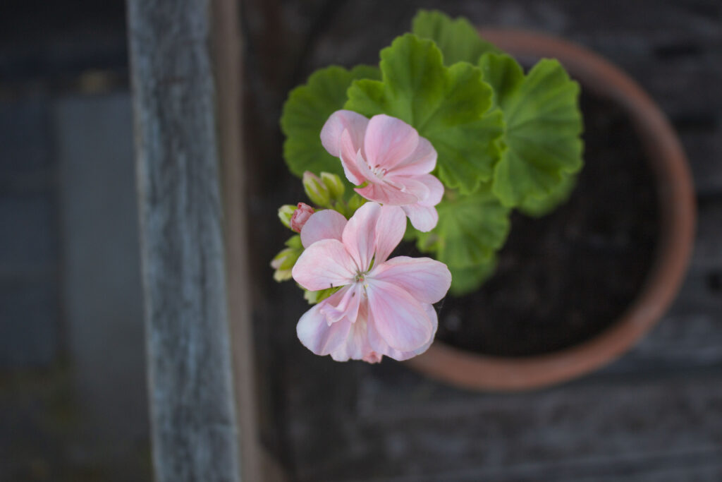 Plant ud i krukker og potter
