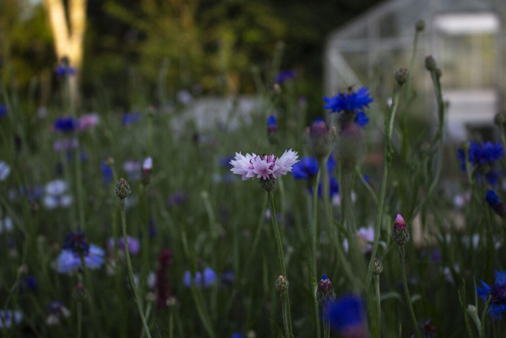 10 gøremål i haven i juli
