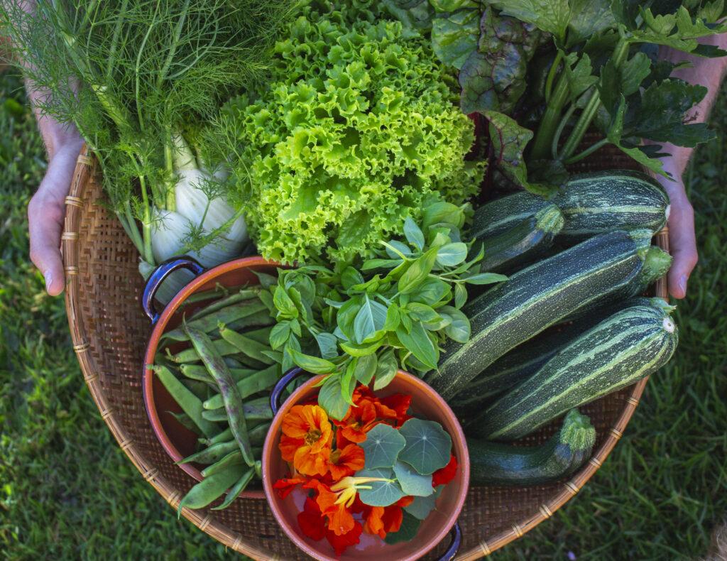 Høsttid & vanding i køkkenhaven