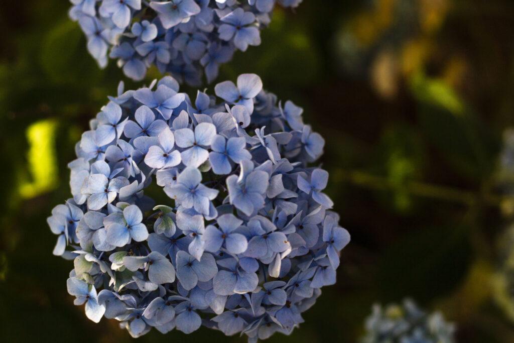 4. Husk vanding af planter i krukker eller bede