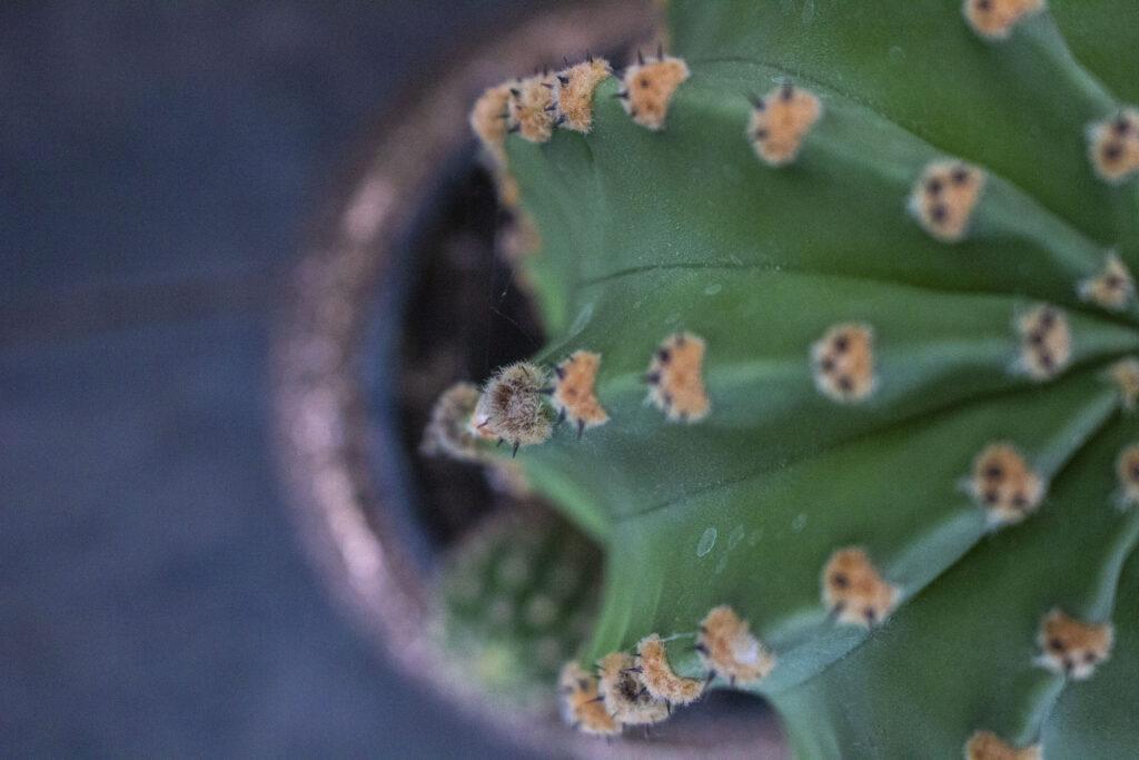 Indret dit hjem med kaktus