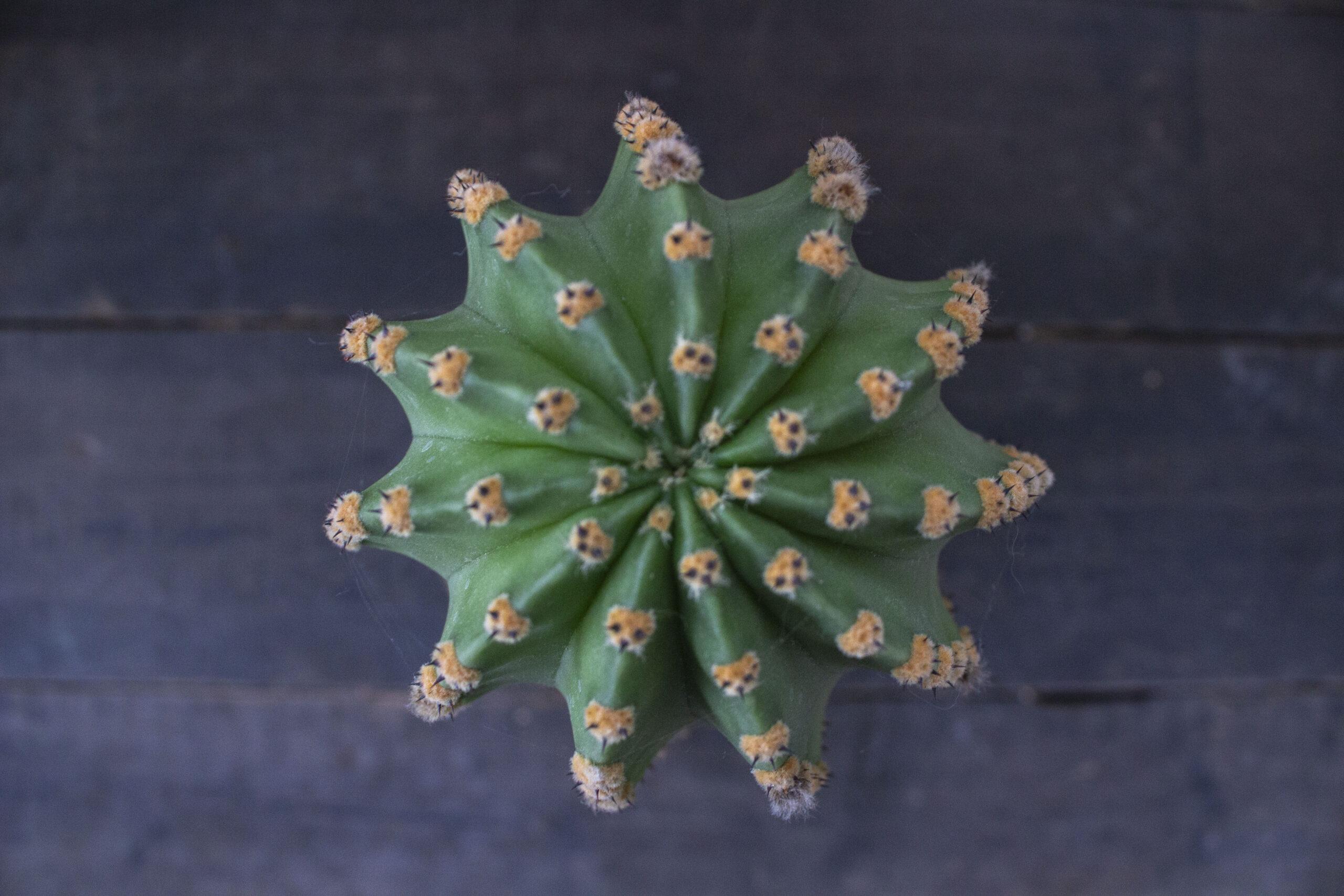Kom godt fra start med din kaktus