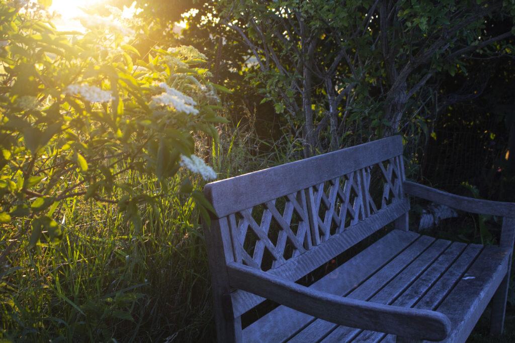 gøremål i haven i august