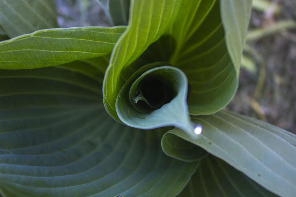 Del dine stauder & plant nye i haven