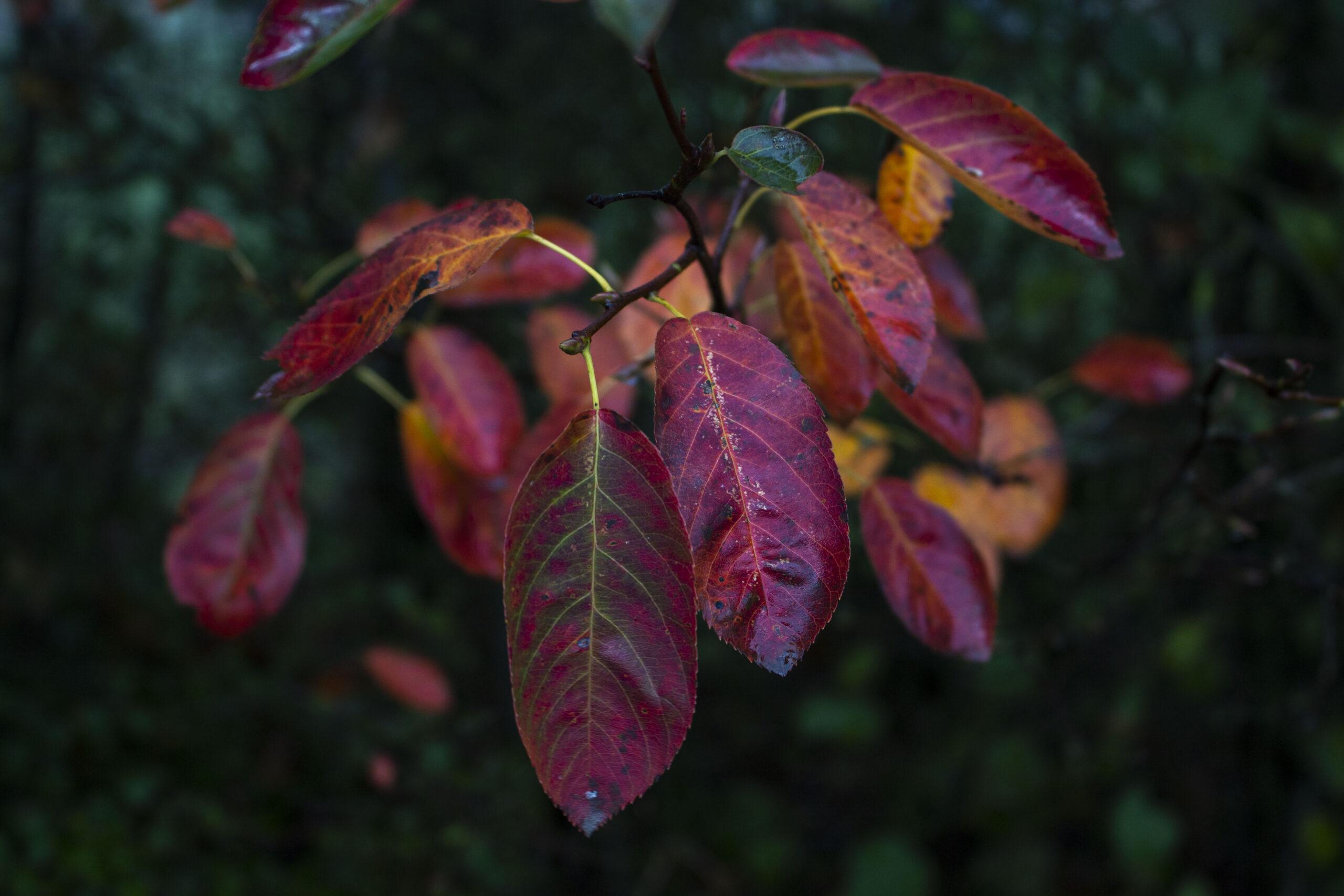 Haven i efteråret