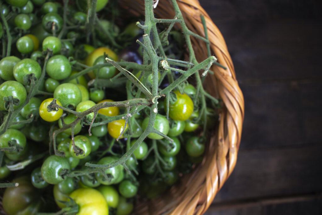 Klip toppen af tomaterne