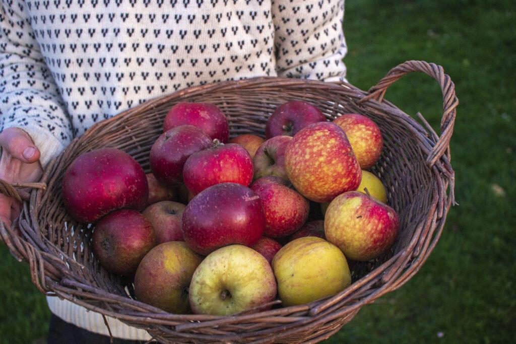 Bagte æbler over bål