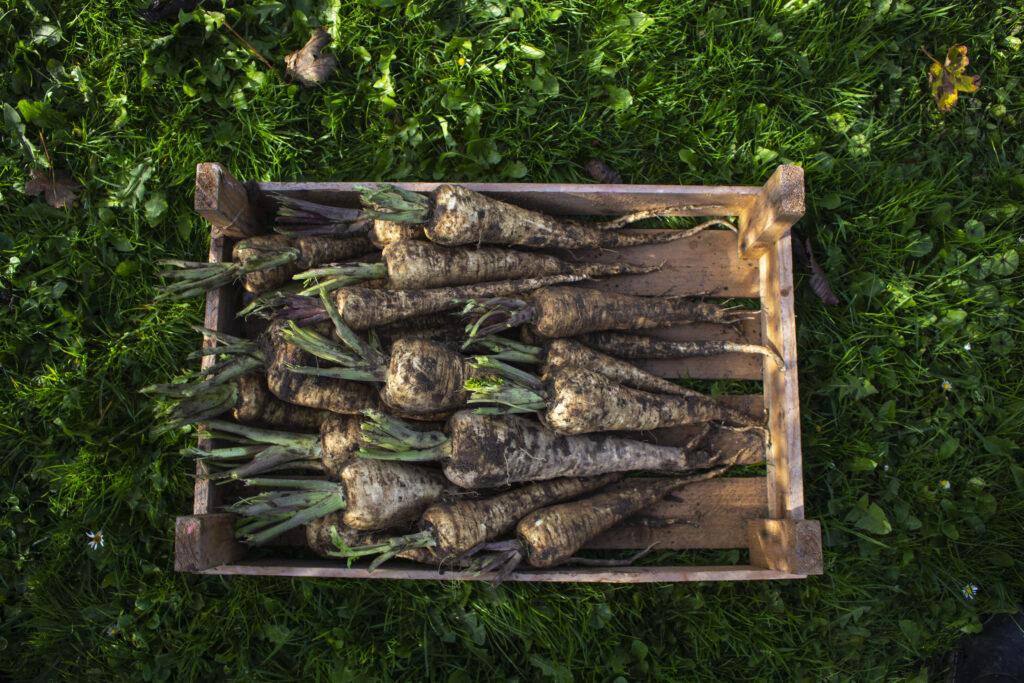 Tjek løbende til frugt & grøntsager i kasser
