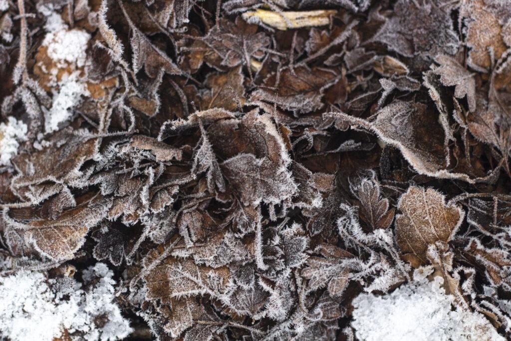Dæk de frostfølsomme planter