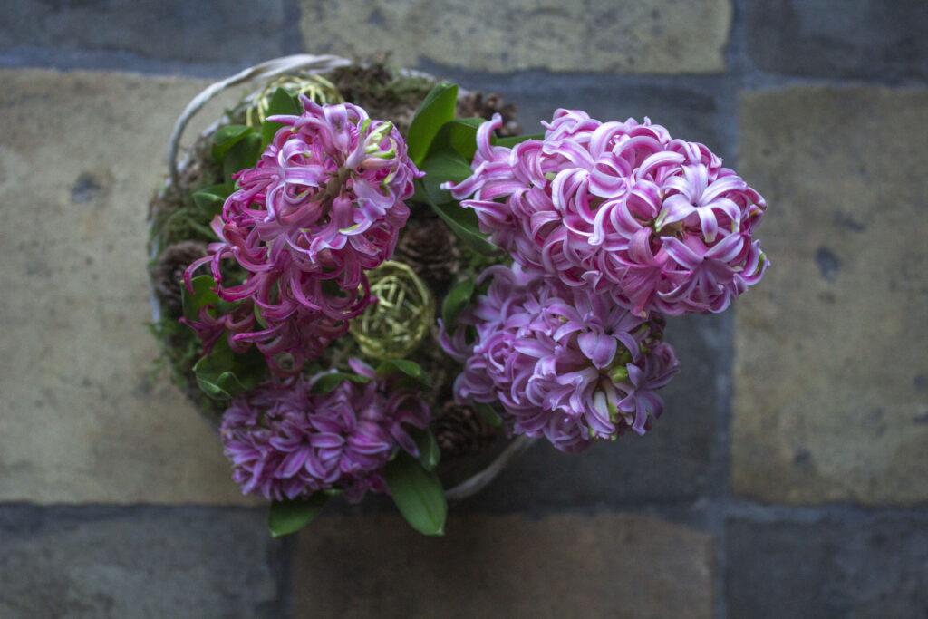 En duft af hyacint