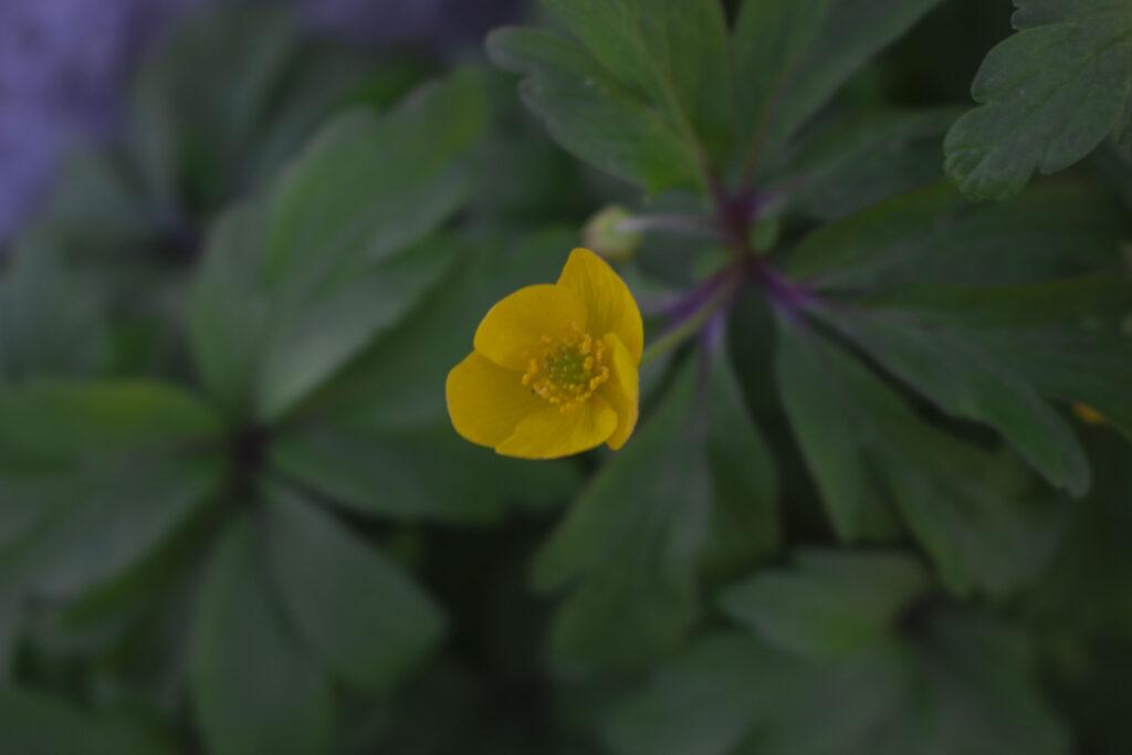 Et symbol på forår