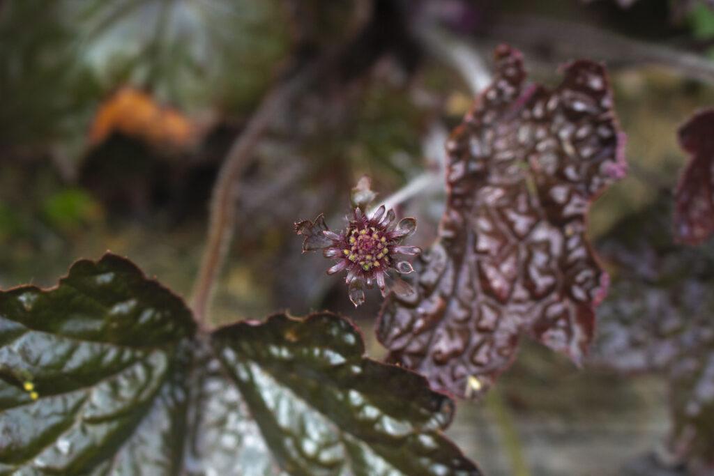 Plant nyt i havens bede