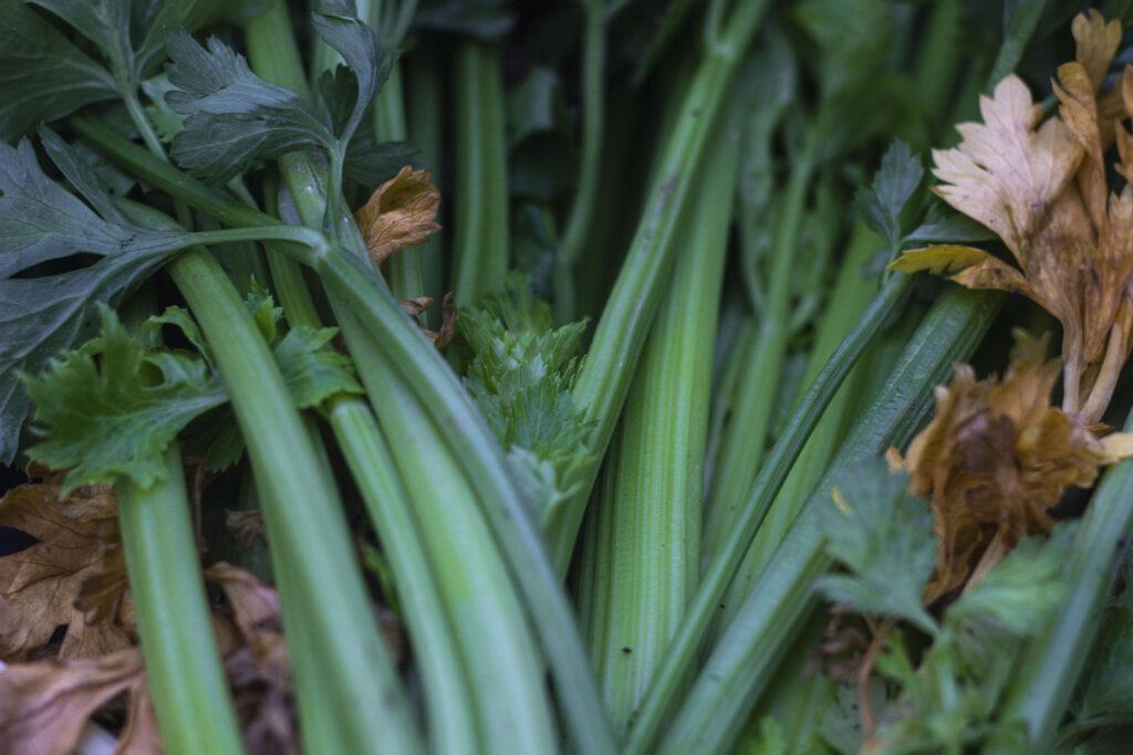 Tips til høst & opbevaring af bladselleri
