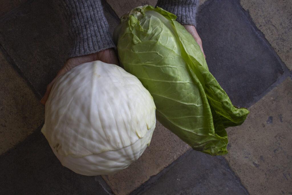 Hjemmelavet sauerkraut – Kom godt i gang