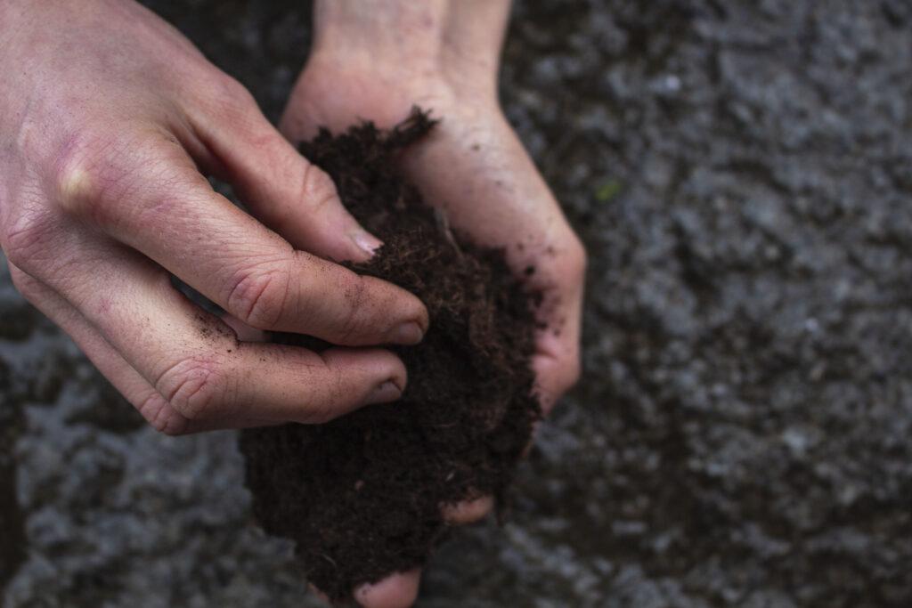 Sådan skal du plante peberrod