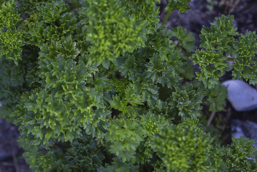 Brug andre urter til kryddersmør
