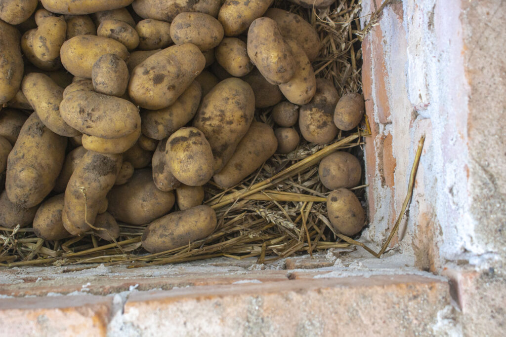 Brug kasser til opbevaring til rodfrugter om vinteren