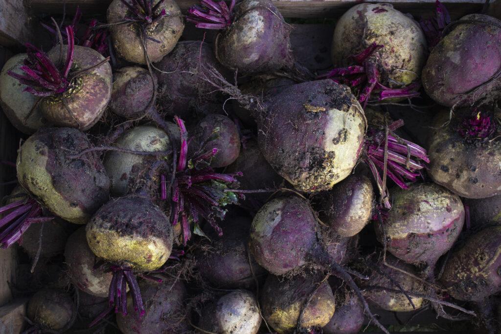 Guide: Vinteropbevaring af rodfrugter & grøntsager